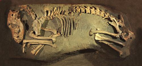 Dogs cave -mesolithicum-Alblasserwaard
