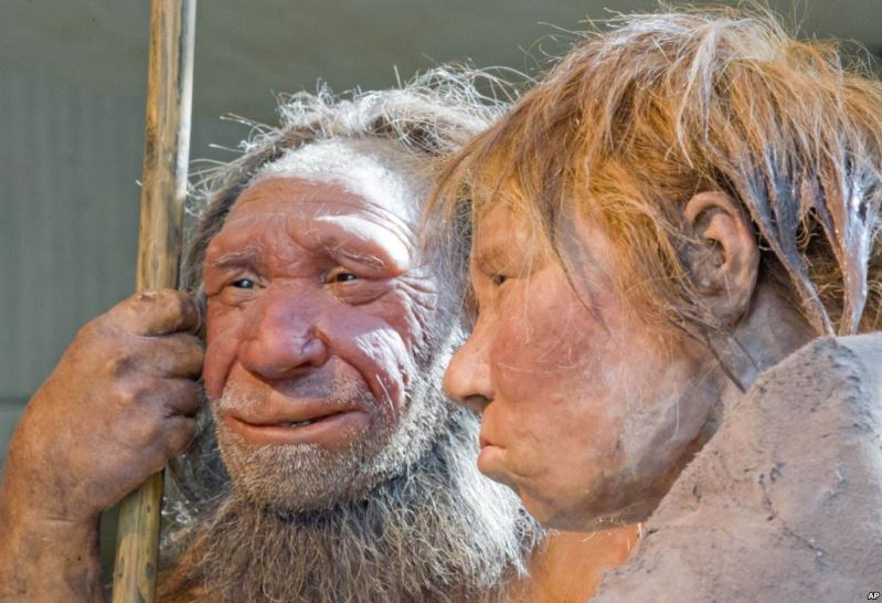 Reconstructions of Neanderthals are seen at a museum in Mettmann, Germany