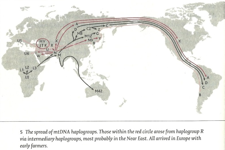The spread of mt-DNA haplogroups - Jean Manco