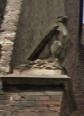 Een Valk op de Poort van de Beyard