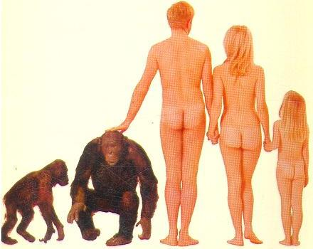 Naked ape, Desmond Morris