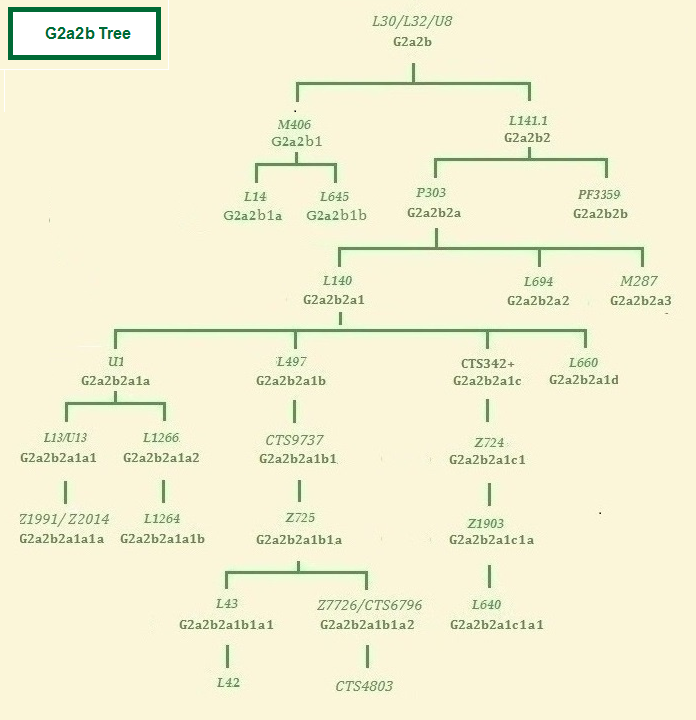 Haplogroup G2a2b tree
