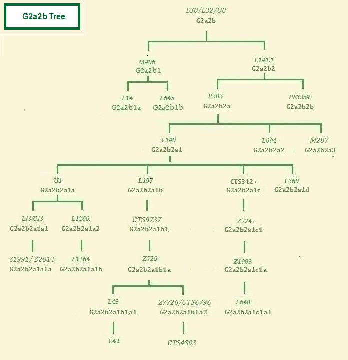 Haplogroup G2a2b tree