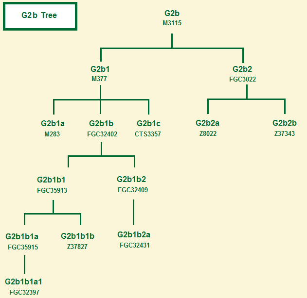 Haplogroup G2b tree