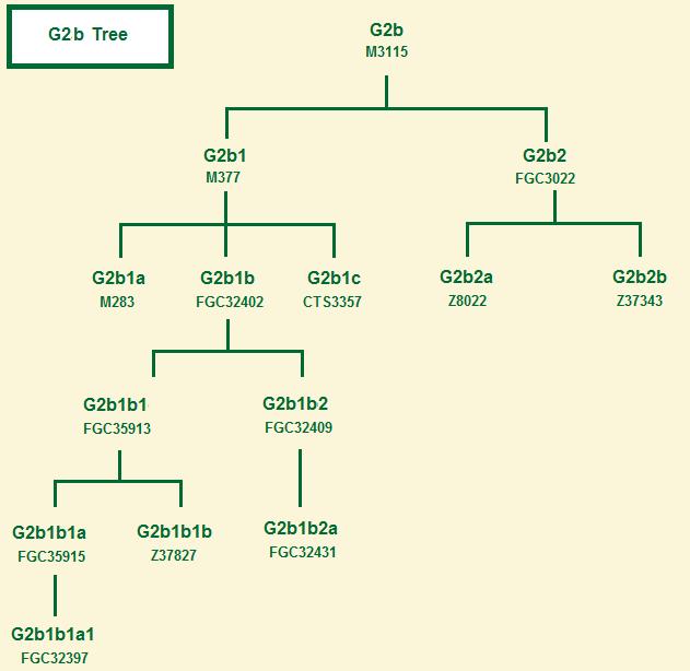Haplogroup G2b tree