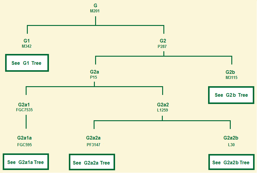 Haplogroup G tree